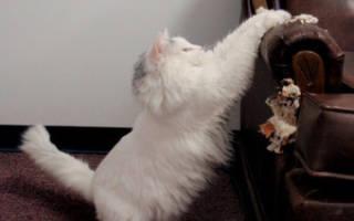 Чтобы кошка не царапала мебель и обои