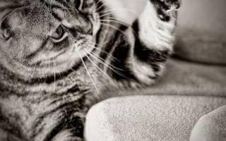 Чем обработать обои чтобы кошка не драла